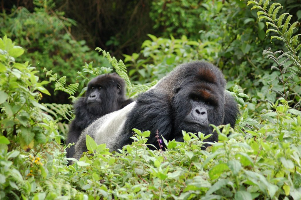 3 Day Gorilla Trekking Safari