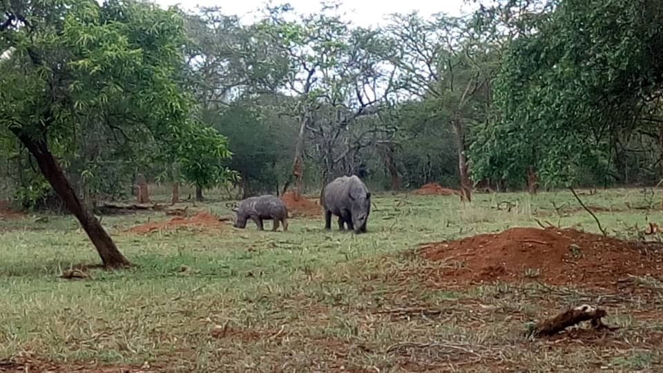 Uganda Rhinos