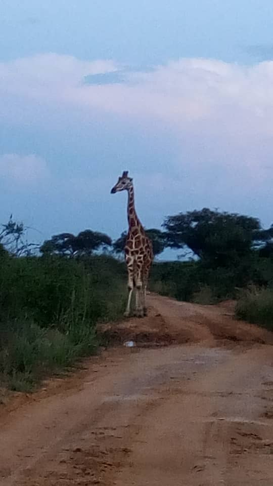 2 Days Lake Mburo National Park Tour