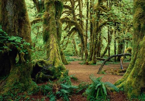 Kigwena Forest