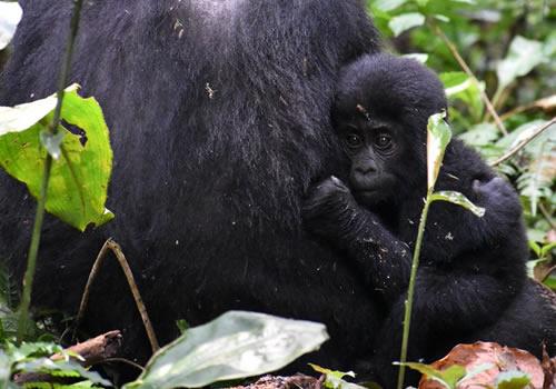 1 Day Rwanda Safari