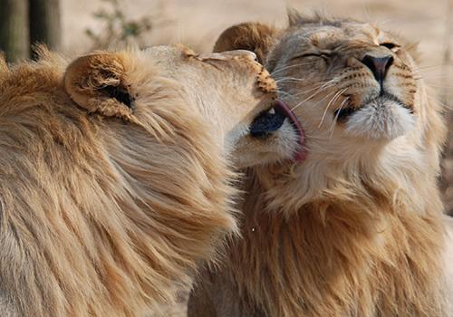 13 Days Uganda Combined Safari