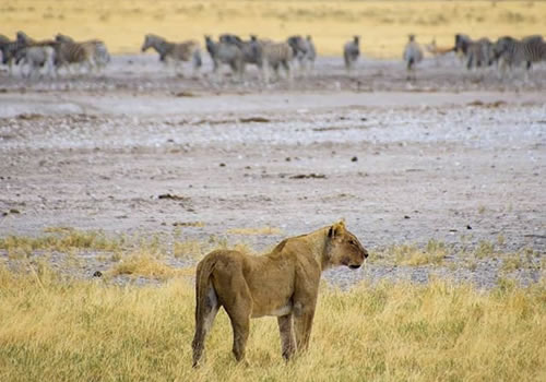 5 Days Wildlife Safari to Kenya