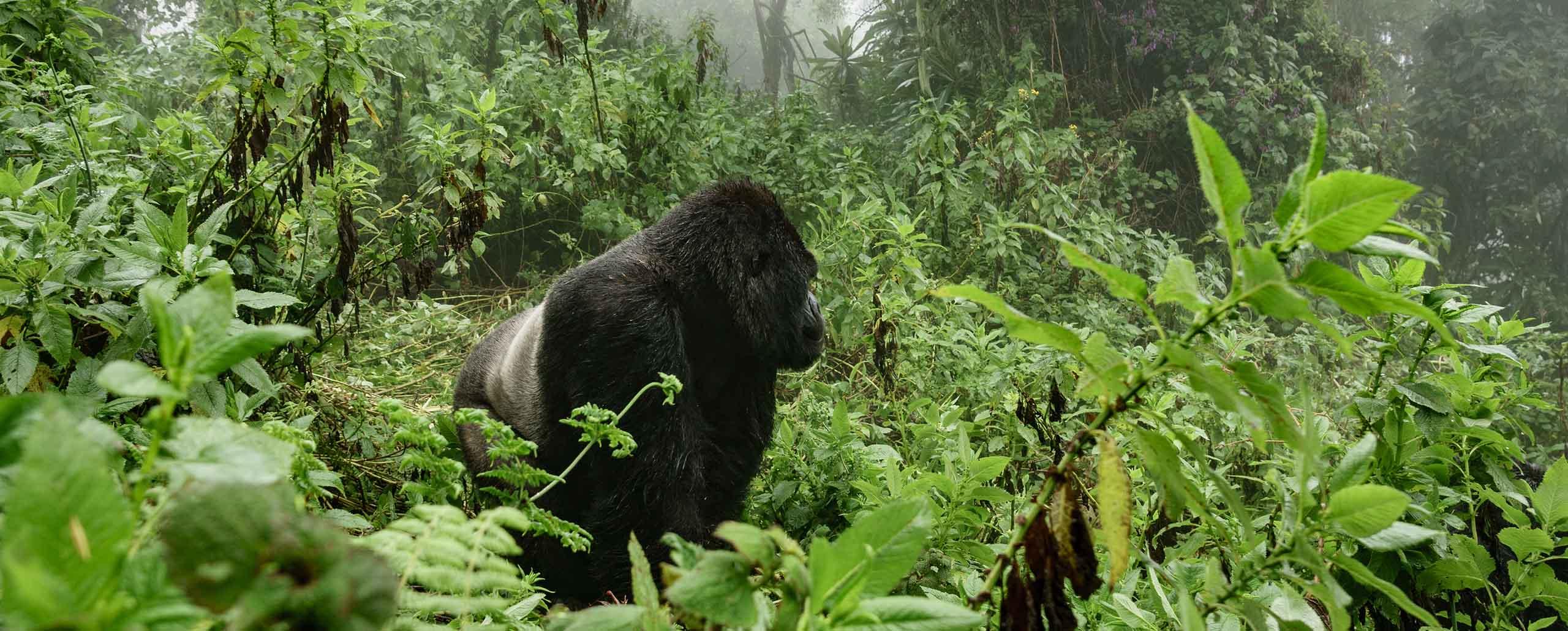 Uganda Tourist Activities