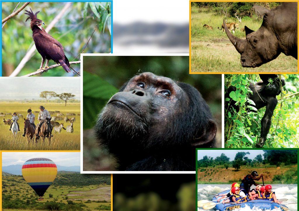 Uganda & Rwanda Safari Offers